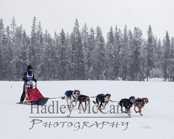 Bachelor Butte Dog Derby 2014