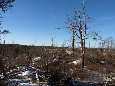 1999 storm of the century blew here more than eight years ago.   Today, the landscape still looks barren.   Lot of brush obscures the view in summer.