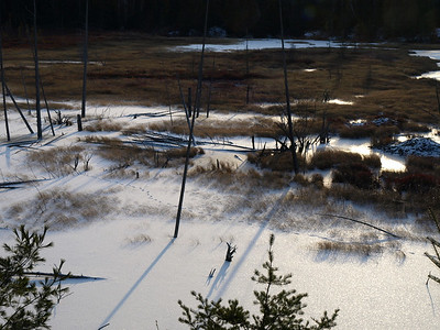 Dog tracks in the wetland.  A quiet witness to a wolf passing through here not long ago.