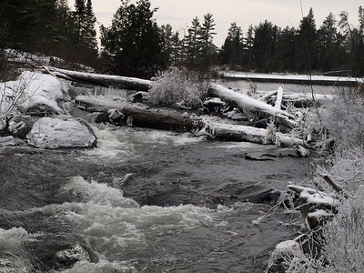 Many of the logs have this layer of ice on them, making crossing dangerous.