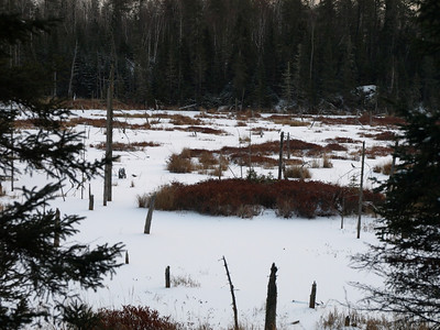Bogs, bogs, bogs.   I love the brown color of bogs in late fall and winter.