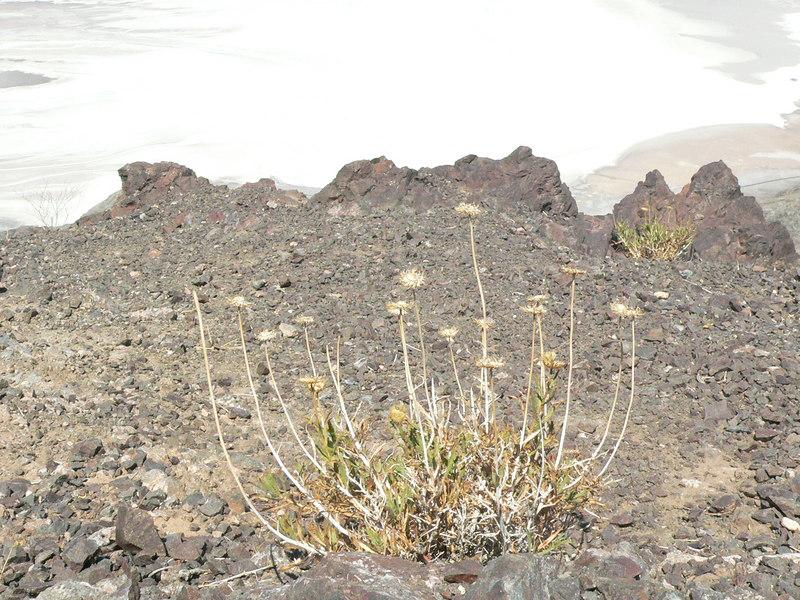 ... it's actually salt lining the desert floor blow us.