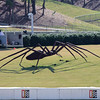 Giant Spider by Bill Secunda