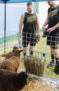 A couple of the players check out the lambs.