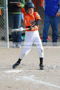 BBL Baseball 2008 Pinto