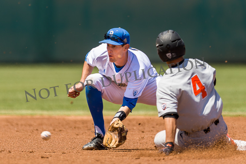 0019oregon state baseball17