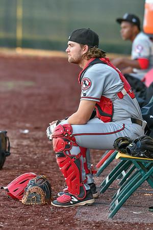 Billings Orem Baseball