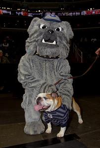 Hoyas mascot Jack the Bulldog is both a costumed mascot and a live dog.
