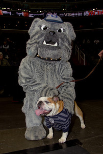Hoyas mascot Jack the Bulldog is both a costumed mascot and a live dog.