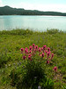 Paintbrush flowers with a view of Island Lake.