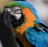 A photographer was using 2 Macaws for props as he worked in the plaza where the Victory Kiss statue is. I snuck in several shots of one of the birds.