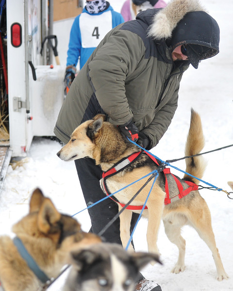 Bud Denega | The Sheridan Press<br /> Allan Berge readies one of his sled dogs during the Bighorn Rush Sled Dog Challenge at Granite Pass Saturday, Dec. 30, 2017.