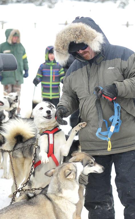 Bud Denega | The Sheridan Press<br /> Allan Berge prepares one of his sled dogs for the Bighorn Rush Sled Dog Challenge at Granite Pass Saturday, Dec. 30, 2017.