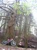 Old tree, Spruce Run morning.