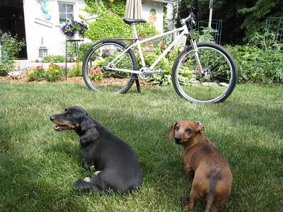 Bikes!!!!