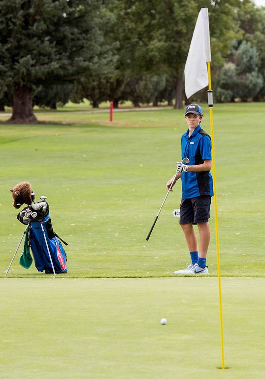 . Centaurus golfer Nick Vaver watches his pitch roll across the green at the Olde Course in Loveland Thursday afternoon August 11, 2016 during Northern Conference Golf tournament play. More photos: BoCoPreps.com (Photo by Michael Brian/Loveland Reporter-Herald)
