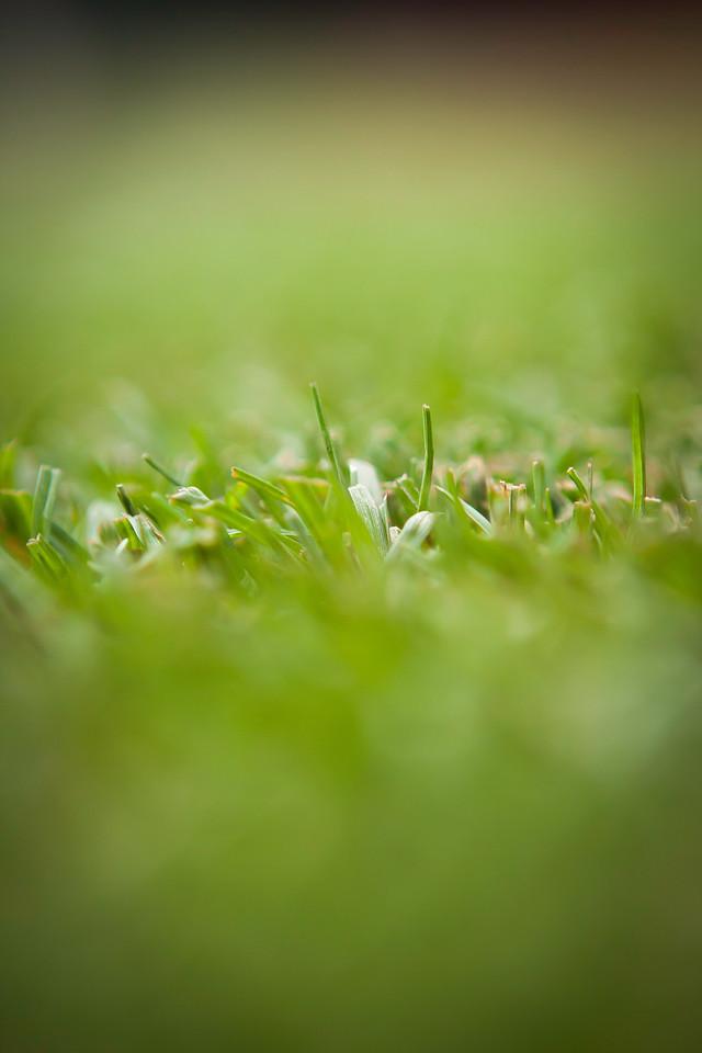 Bullpen grass