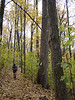 This mountain biker rolls through a paw paw patch on the Limekiln Trail in Brown County State Park, Nashville, Indiana.