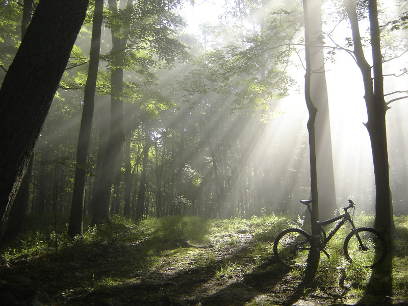 In the Hoosier National Forest near Nebo Ridge on a beautiful summer morning.