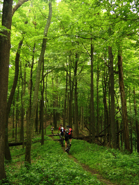 The plant life is vibrant in this photo taken while mountain biking in the Hoosier National Forest near Elkinsville, IN.