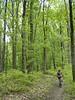 This mountain biker rounds a bend among the hardwood trees on the North Tower Loop in Brown County State Park.