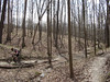 This mountain biker rides the roller-coaster-like trails in Brown County State Park near Nashville, IN.