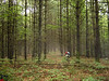 Riding through a stand of beautiful pine trees in the Hoosier National Forest near Elkinsville, IN.