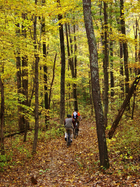 These mountain bikers ride a beautiful leaf-covered trail on a fall afternoon in Hickory Ridge in the Hoosier National Forest near Norman, IN