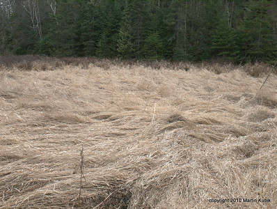 A grassy field on edge of the logging camp.   The trail here is indistinct, so don't panic but remember where you came from.  Crossing the grass field is only 25 yards long.