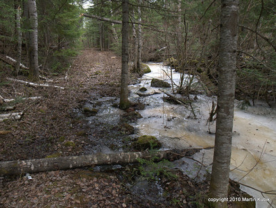 The trail and the stream.   Here is the reason we saved the trail.   I like to come here in May and listen to the sounds of tiny stream.  Later in summer it will be dry and I will wait to come back next spring.