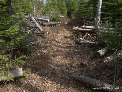 """""""Widfall Alley.""""  Historically, this segment of the trail challenged hikers with frequent treefalls on top of each other.   Today we pass through without a single trunk blocking our path."""