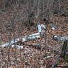 Fallen birch trunk.