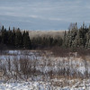 Wetland lined with spruce and poplar trees.