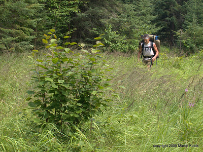 Dave crosses grassy patch just south of the logging camp.