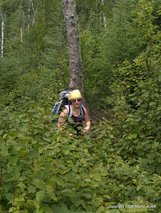 Brush grows easily at rate of two feet per year.  In absence of annual clearing, wilderness trails can quickly overgrow.