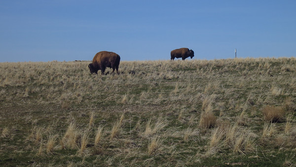 Buffalo Run 100