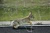 50-yard Bunny Hop, Willowridge 3/7/2008