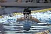 aCHSSwim1  0810