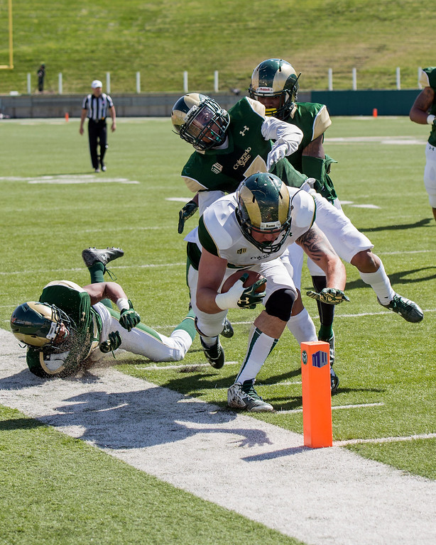 . Rams tight end Mitch Parsons (85) beats the defense to the pylon for a touchdown Saturday afternoon April 23, 2016 during the 2016 Green and Gold Spring Game at Hughes Stadium in Fort Collins. (Photo by Michael Brian/Loveland Reporter-Herald)