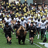 """Here comes Ralphie!"" before the CU Spring game on Saturday.<br /> Cliff Grassmick / April 10, 2010"