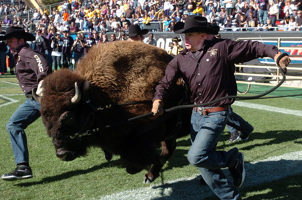 Ralphie wasn't happy either on Saturday.<br /> Cliff Grassmick / October 31, 2009