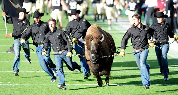 University of Colorado's mascot Ralphie runs the field during halftime against Utah on Folsom Field in Boulder on Friday Nov. 23, 2012. DAILY CAMERA/ JESSICA CUNEO.