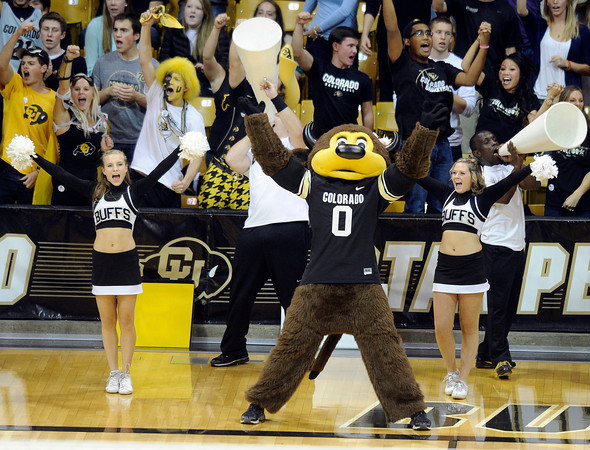 """University of Colorado mascot Chip and the CU Buff cheerleaders try to get the crowd to cheer during a volleyball match against Arizona State on Friday, Oct. 12, at the Coors Event Center on the CU campus in Boulder. For more photos of the match go to  <a href=""""http://www.dailycamera.com"""">http://www.dailycamera.com</a><br /> Jeremy Papasso/ Camera"""