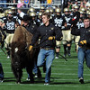 "Ralphie is in good form in the Oregon game.<br /> For more photos of the game, go to  <a href=""http://www.dailycamera.com"">http://www.dailycamera.com</a>.<br /> October 22, 2011 / Cliff Grassmick"
