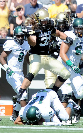 """Jon Major of CU celebrates his sack of Sac State QB, Garrett Safron, on Saturday.<br /> For more photos of the game, got o  <a href=""""http://www.dailycamera.com"""">http://www.dailycamera.com</a>.<br /> Cliff Grassmick  / September 8, 2012"""