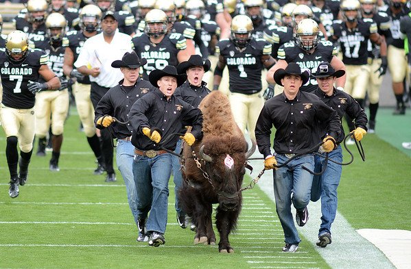 "Ralphie runs ahead of the team before the Stanford game.<br /> For more photos of the game and the parade, go to  <a href=""http://www.dailycamera.com"">http://www.dailycamera.com</a>.<br /> Cliff Grassmick / November3, 2012"