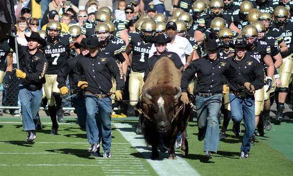"Coach Jon Embree runs behind Ralphie at the start of the Washington game.<br /> For more photos of the CU game, go to  <a href=""http://www.dailycamera.com"">http://www.dailycamera.com</a><br /> Cliff Grassmick / November 17, 2012"