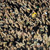 "University of Colorado fans show their team spirit during the football game against University of Georgia on Saturday, Oct. 2, at Folsom Field. For more photos go to  <a href=""http://www.dailycamera.com"">http://www.dailycamera.com</a><br /> Photo by Jeremy Papasso"
