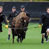 "Ralphie the Buffalo ran Prentup Field before the CU Iowa State soccer game on Sunday.<br /> For more photos of the game, go to  <a href=""http://www.dailycamera.com"">http://www.dailycamera.com</a>.<br /> Cliff Grassmick / October 10, 2010"