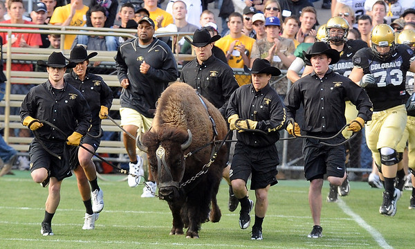"""Jon Embree, back left, is running behind Ralphie again.<br /> For more photos of the game and a video of the alumni game, go to  <a href=""""http://www.dailycamera.com"""">http://www.dailycamera.com</a>.<br /> Cliff Grassmick/ April 9, 2011"""